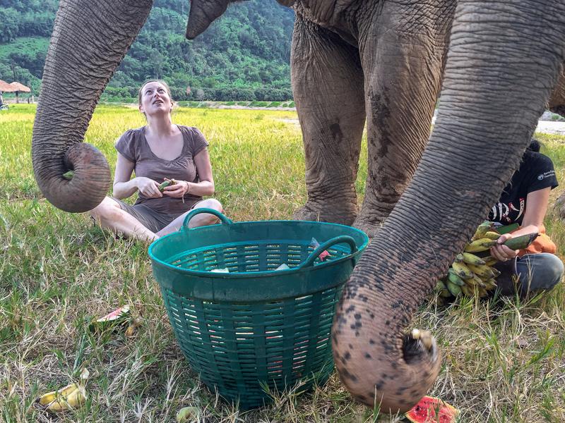 At the Elephant Nature Park we sat under three elephants, feeding them bananas and water melon