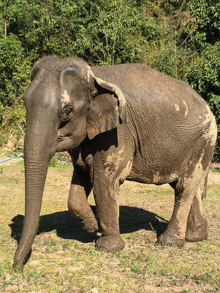 soggy_elephant