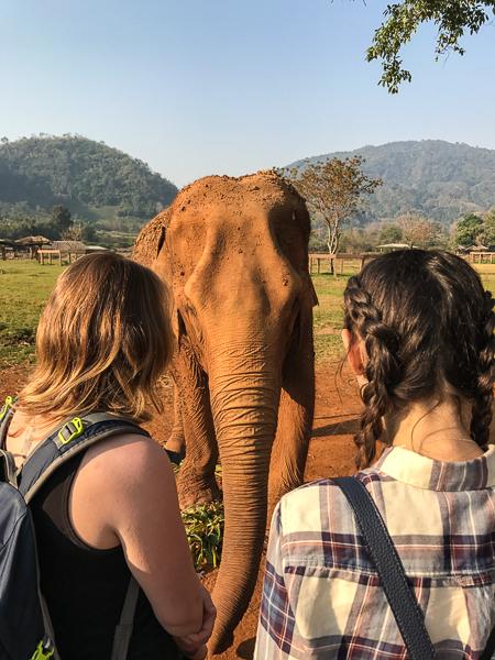 elephant_eye_to_eye