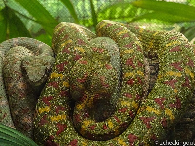 costa_rica_snakes.jpg