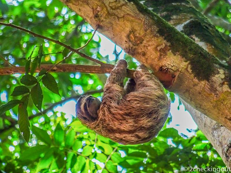 costa_rica_sloth.jpg