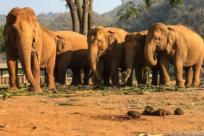 Choosing an ethical elephant experience