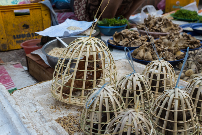 birds_market_luang_prabang.jpg