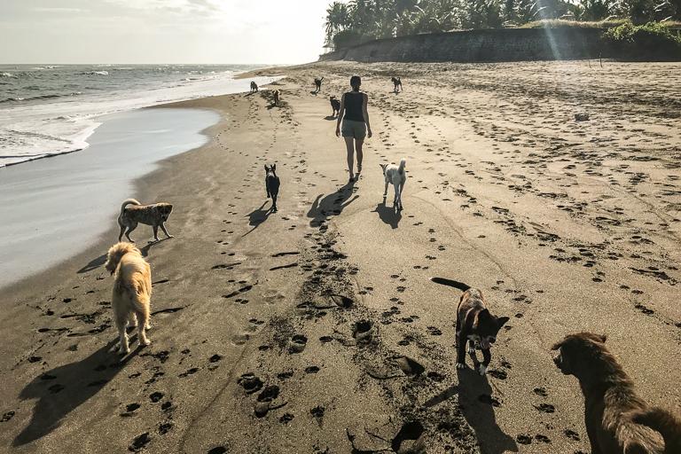 bali_dogs_beach_walk.jpg