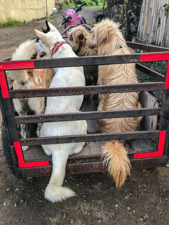 dogs_in_trailer.jpg
