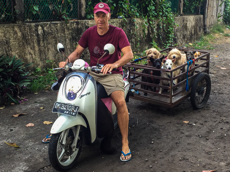 scooter_and_trailer_full_of_dogs.jpg