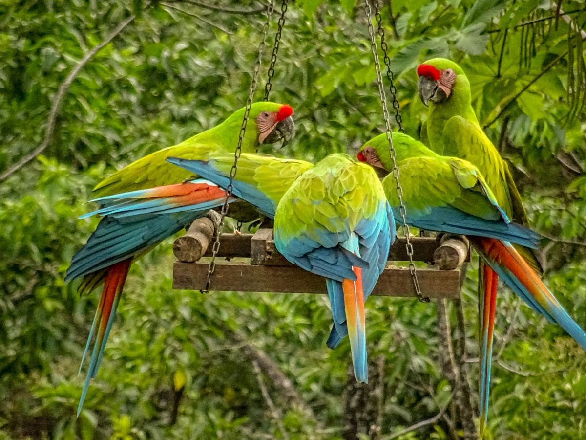 Costa Rica: Animal Magic