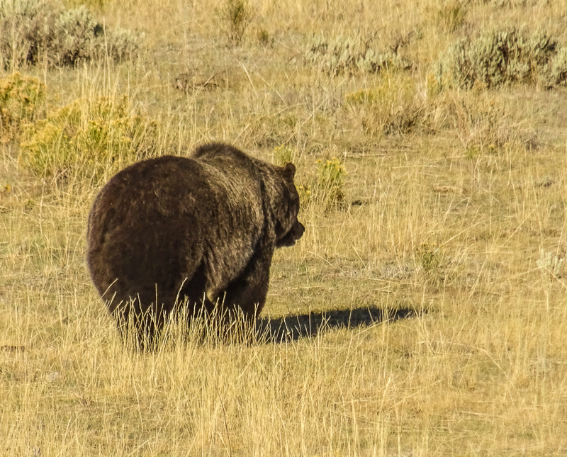 Bear, Bison and Beauty