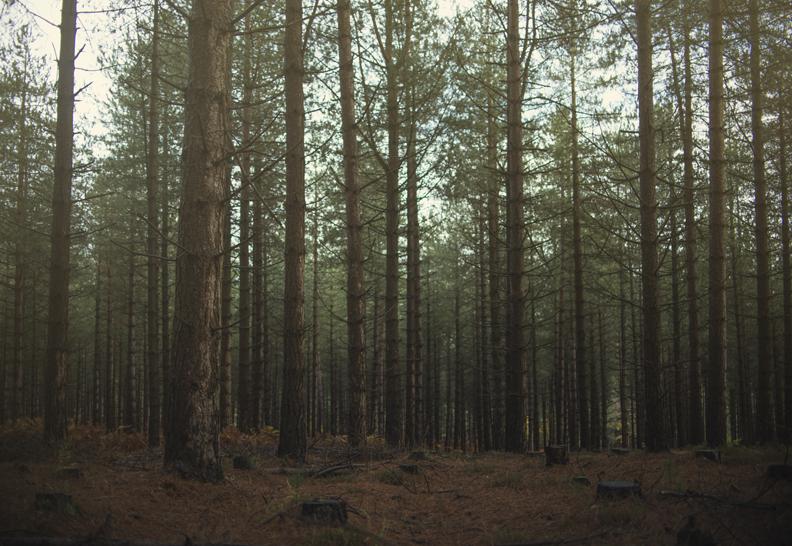 smallforest.jpg
