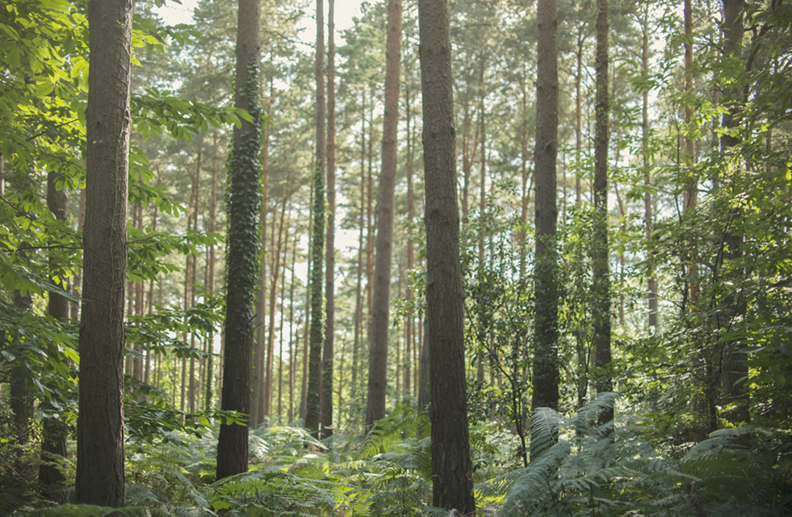 stephosmond_cadlandwoods.jpg