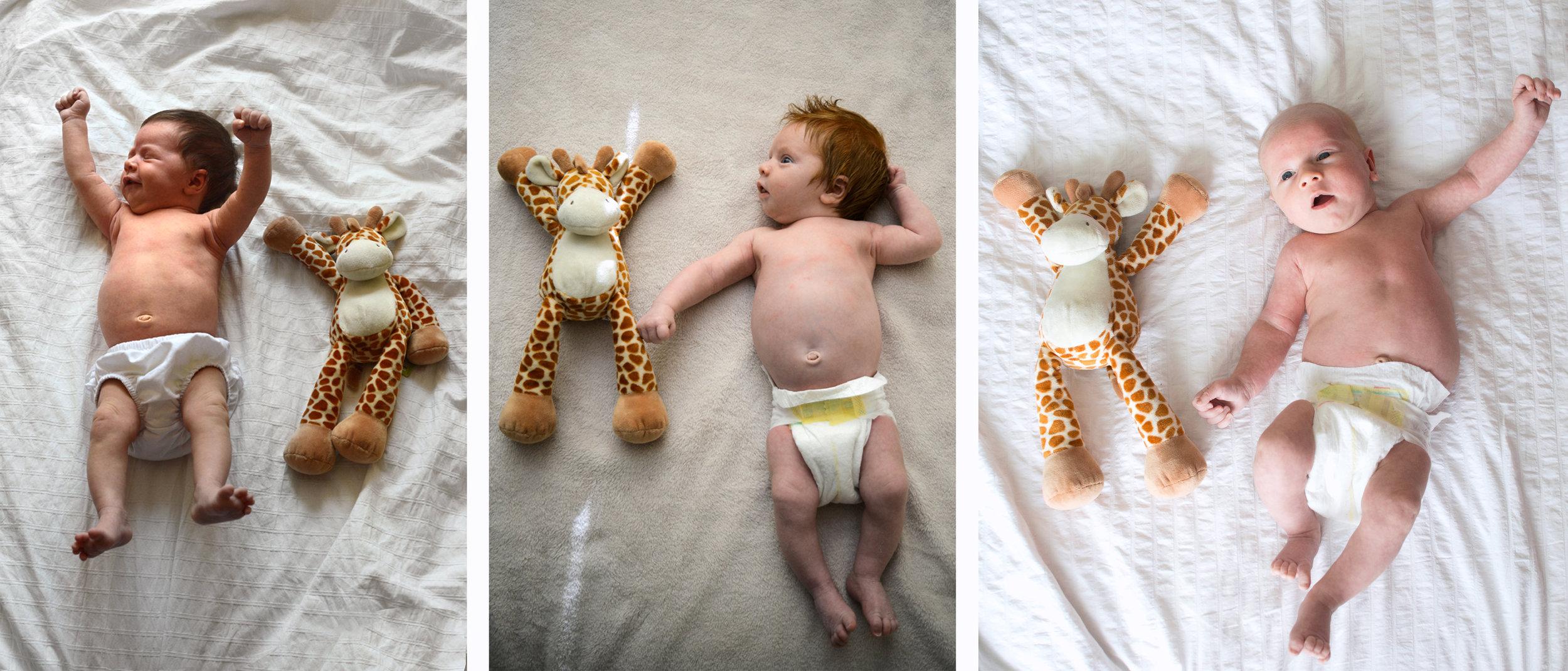 giraffetriptych.jpg