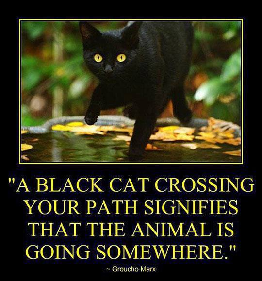 Groucho Marx Black Cat.jpg