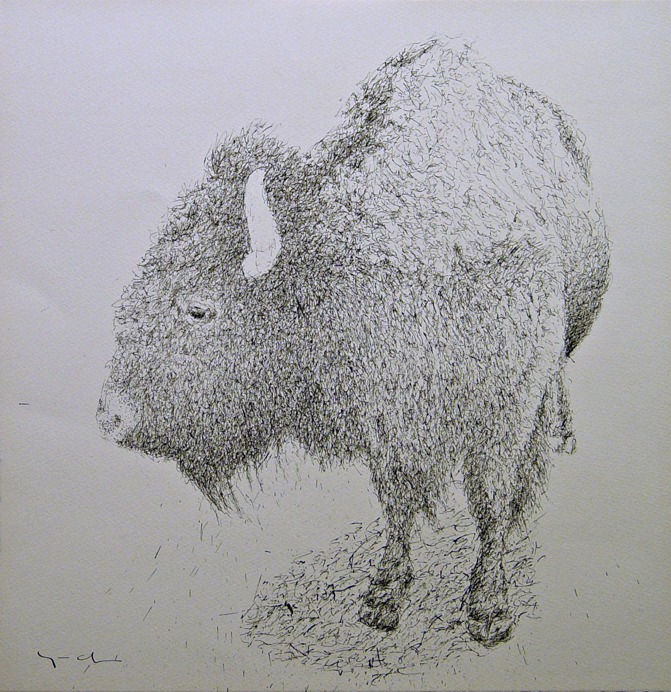 Buffalo / Ink on Paper / 16.5 x 16