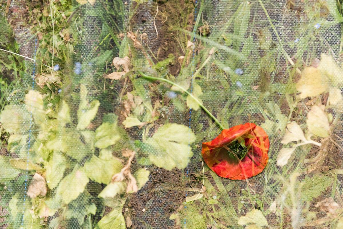 Jo Tennant 02 Discarded Poppy.jpg