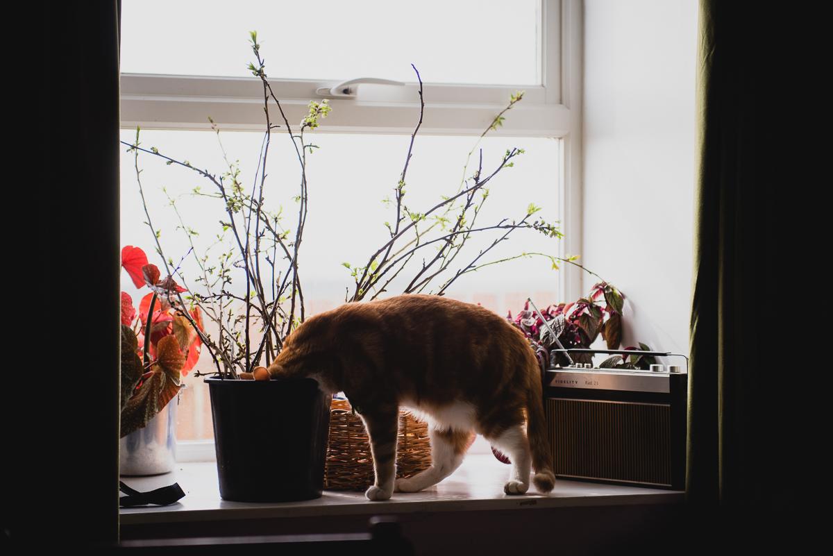 botanicals_jotennant003.jpg