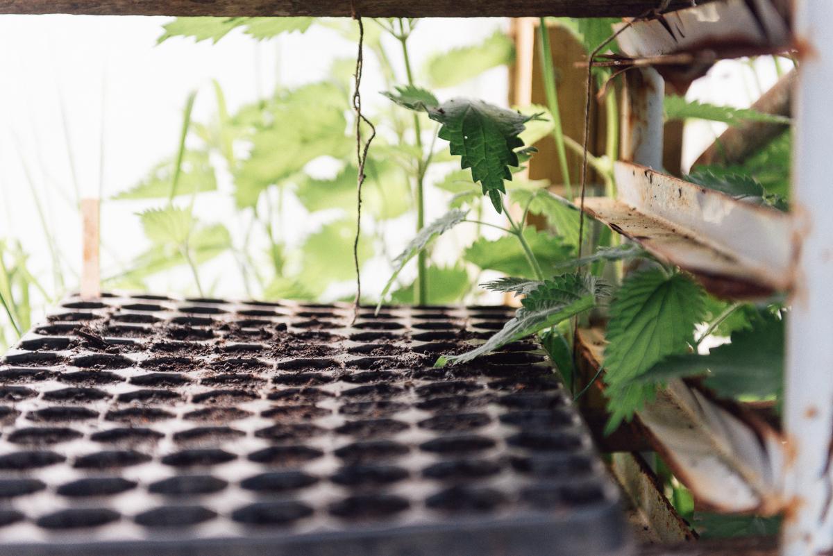 botanicals_jotennant001-2.jpg