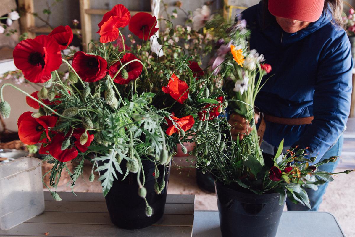 botanicals_jotennant002-2.jpg