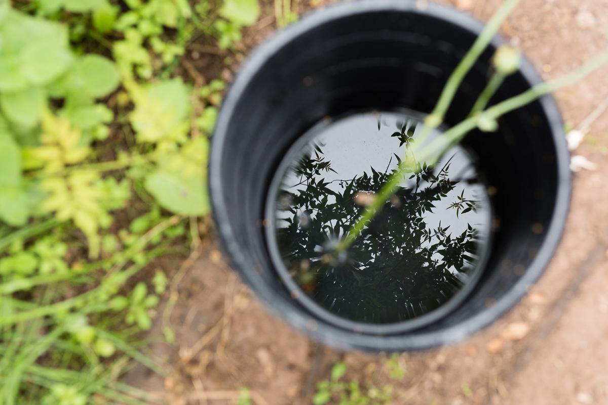 botanicals_jotennant 03002-4.jpg
