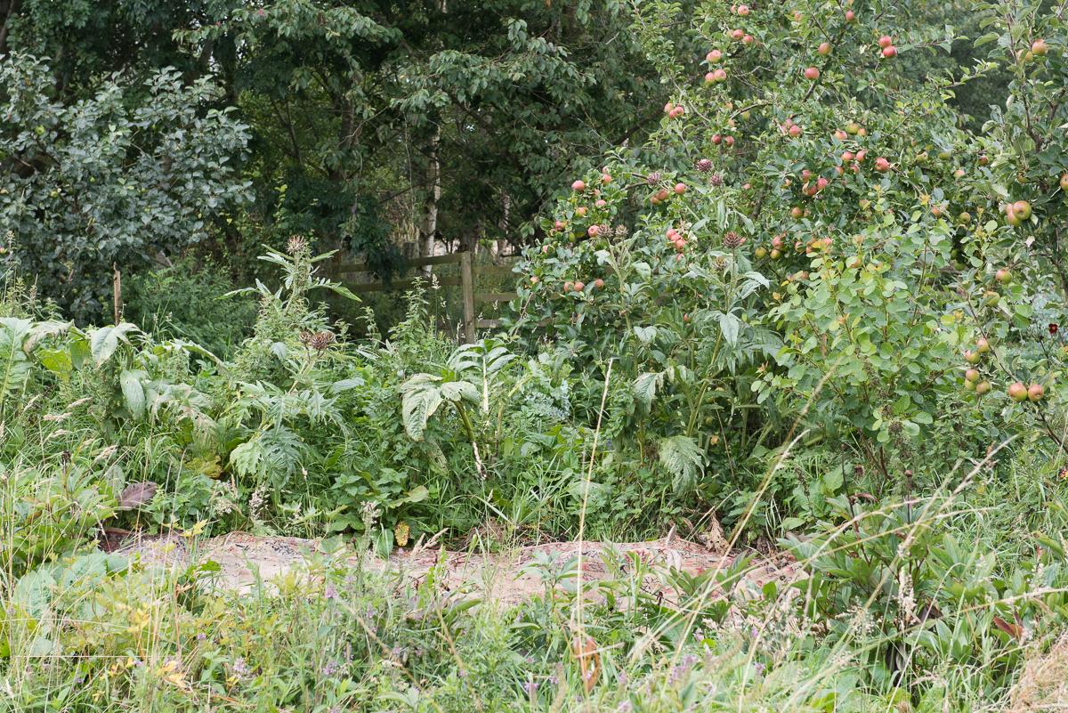 botanicals_jotennant 03003.jpg