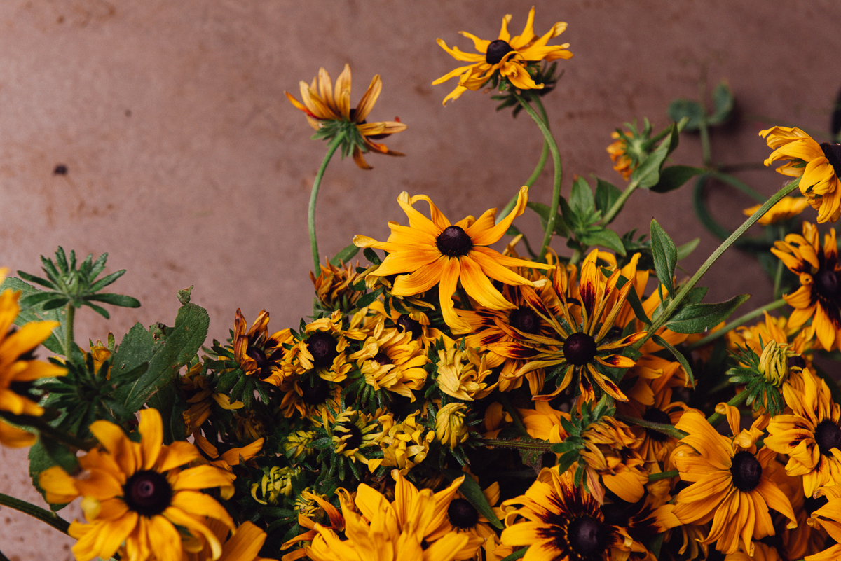 botanicals_jotennant 03001-5.jpg