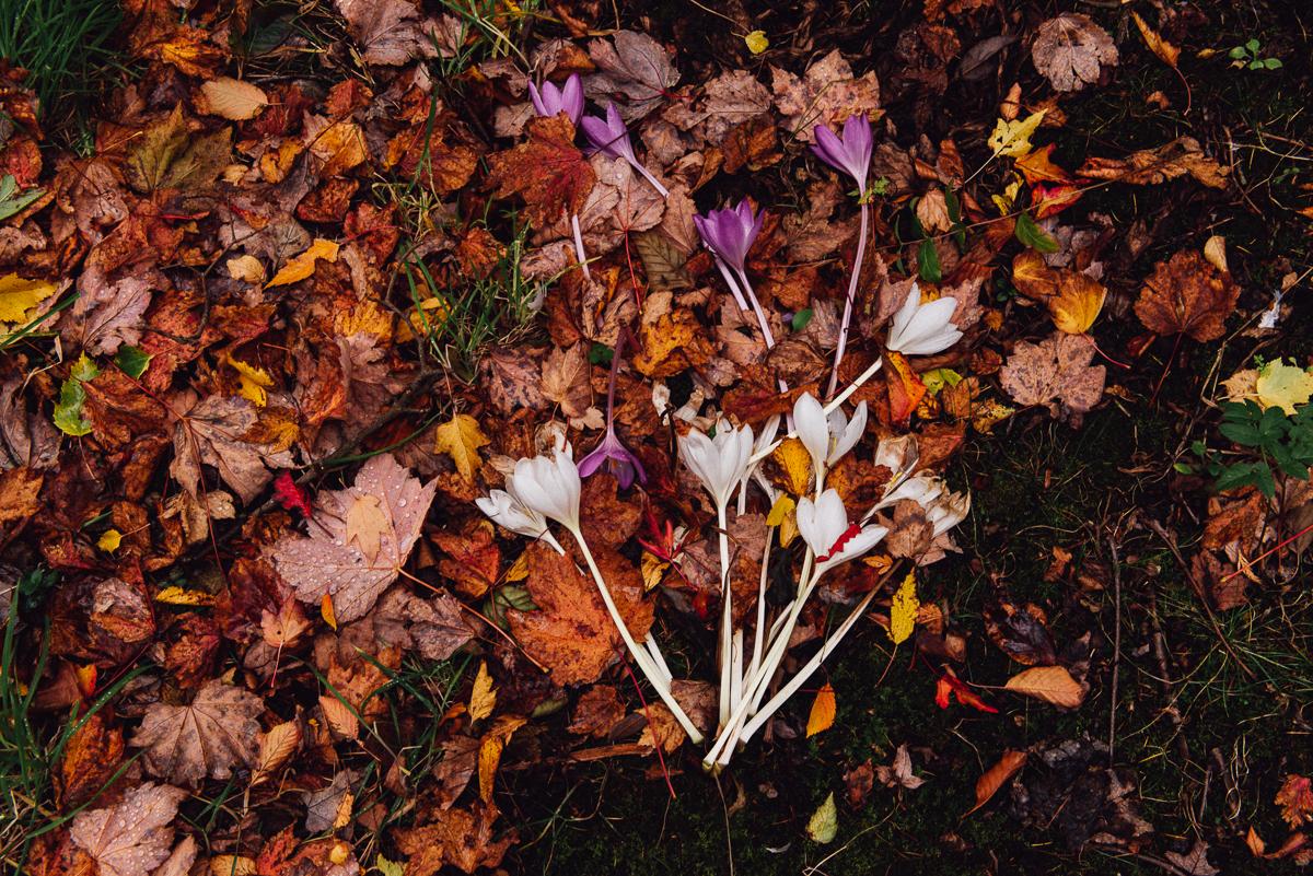 botanicals_jotennant 03003-5.jpg