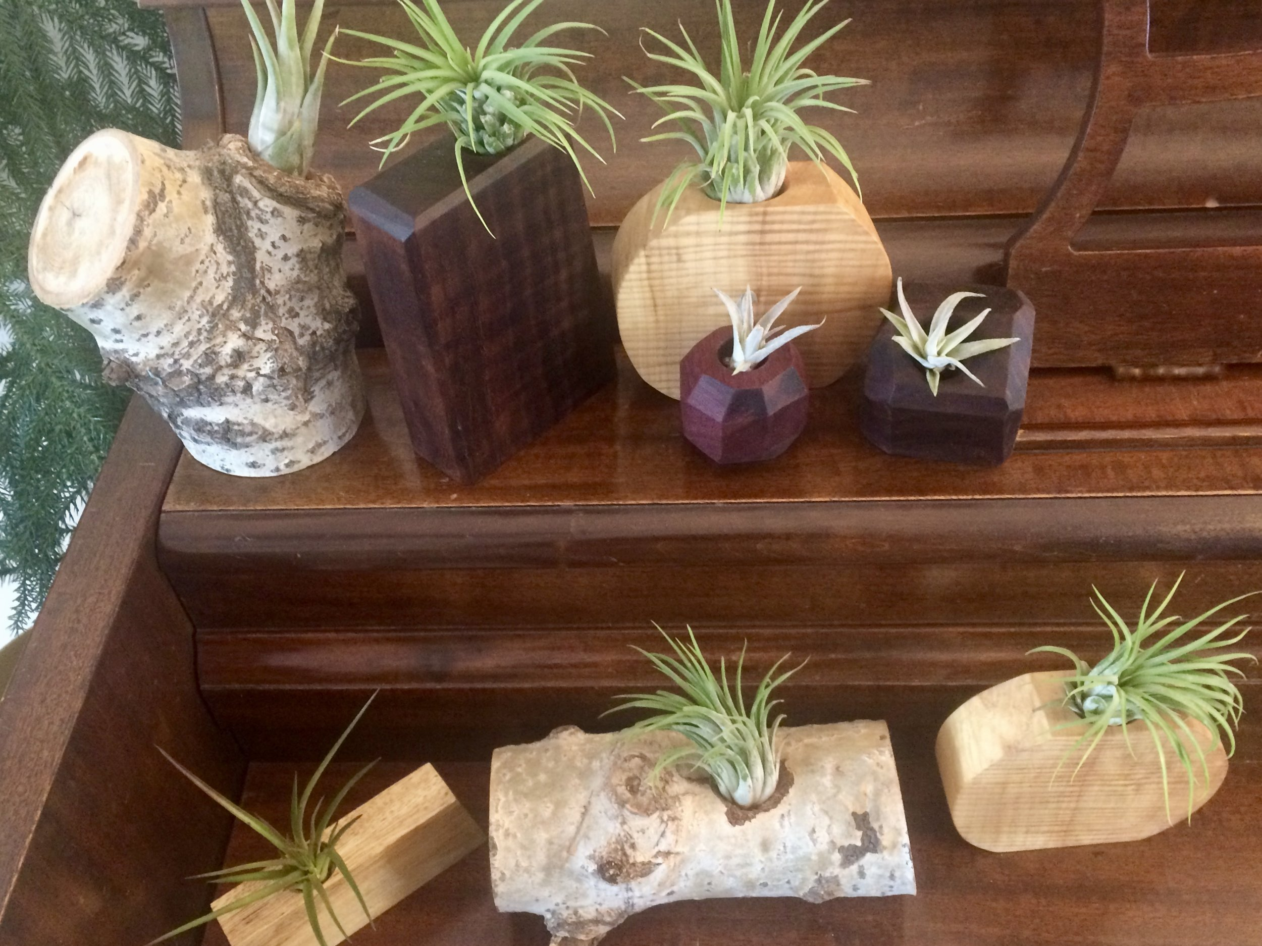 various succulent holders
