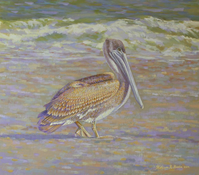 Sunlit Pelican Basking in the Glow   , 14 x 16, oil on board, by William R. Beebe
