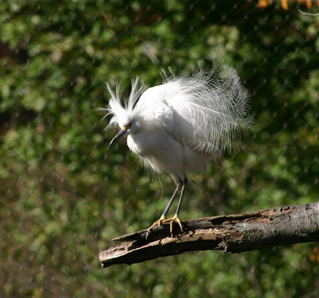Yikes~look at my feathers!