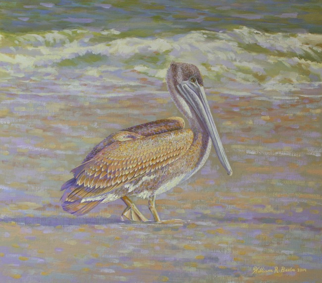 Sunlit Pelican Basking in the Glow by William R. Beebe, SOLD