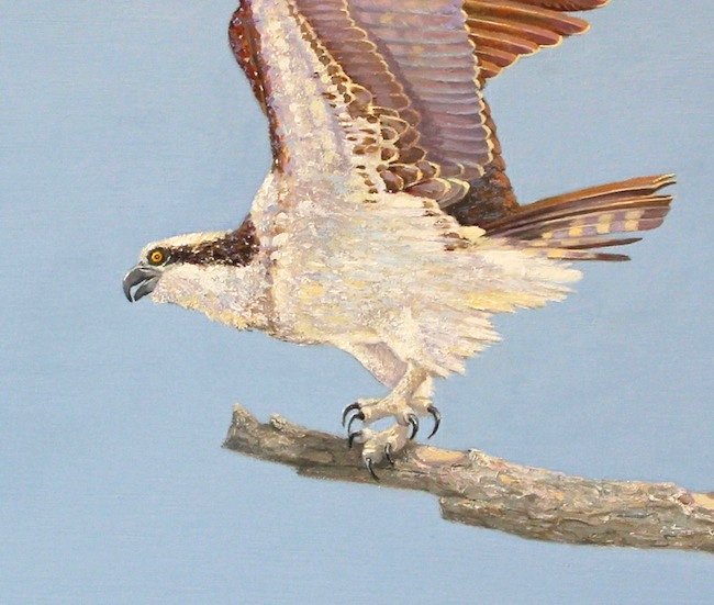 Out on a Limb (detail shot) by William R. Beebe