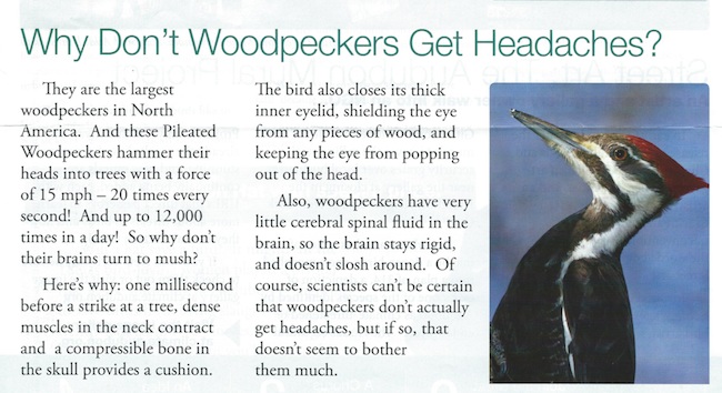 From the Audubon Newsletter February 2015 Photograph by Wil Hershberger