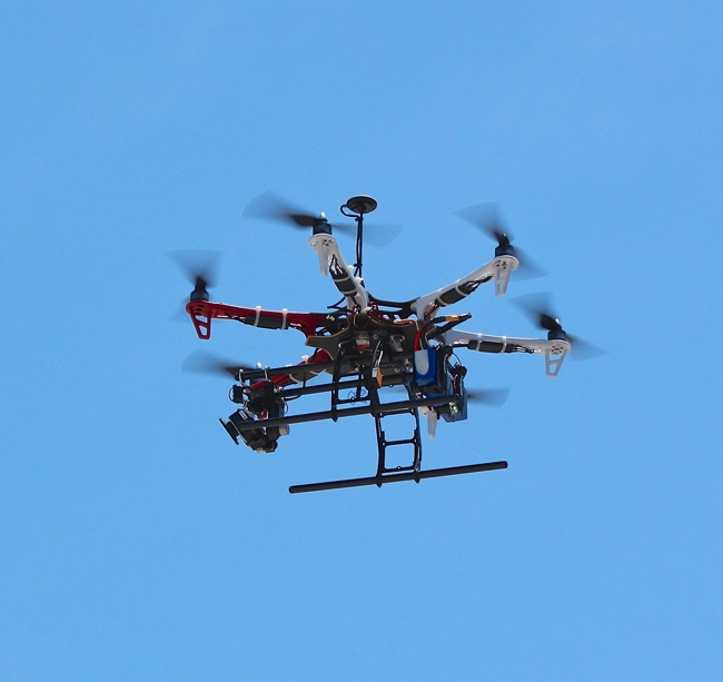The Drone! Photographed by William R. Beebe