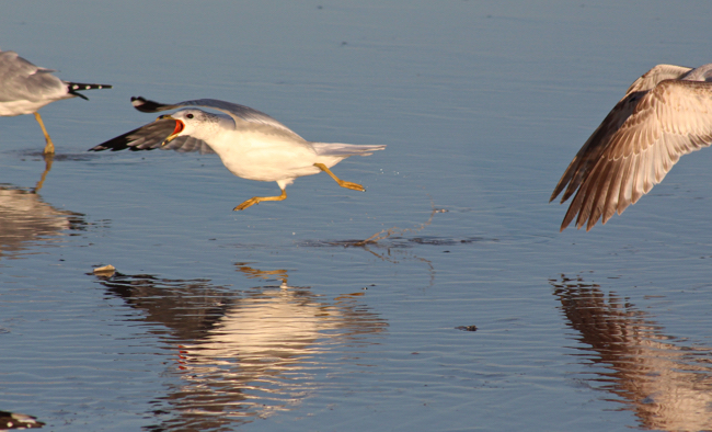 On the Run,photo by William R. Beebe