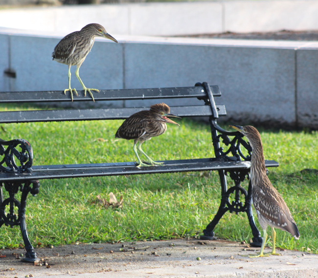 The Bench Warmers, photo by William R. Beebe