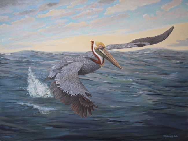 Pelican Power    by William R. Beebe, 30 x 40, Oil on canvas, $5500