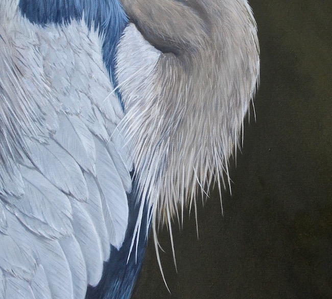 The Great One   by William R. Beebe, feather detail