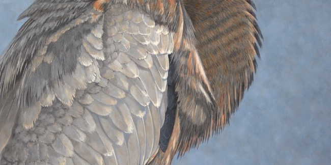 Junior Blue   by William R. Beebe, feather detail