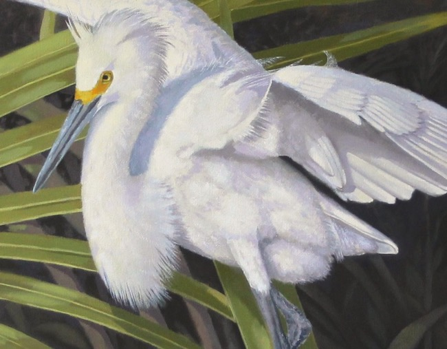 Snowy's Island Sanctuary   by William R. Beebe, feather detail