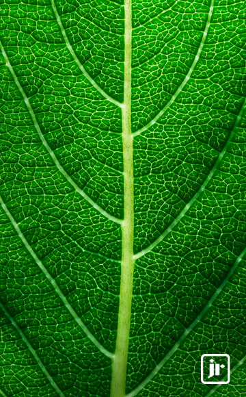 JR_Sustainability_THUMB.jpg