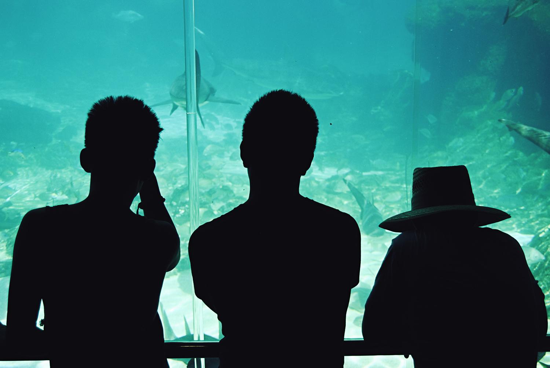 at the shark bay, sea world