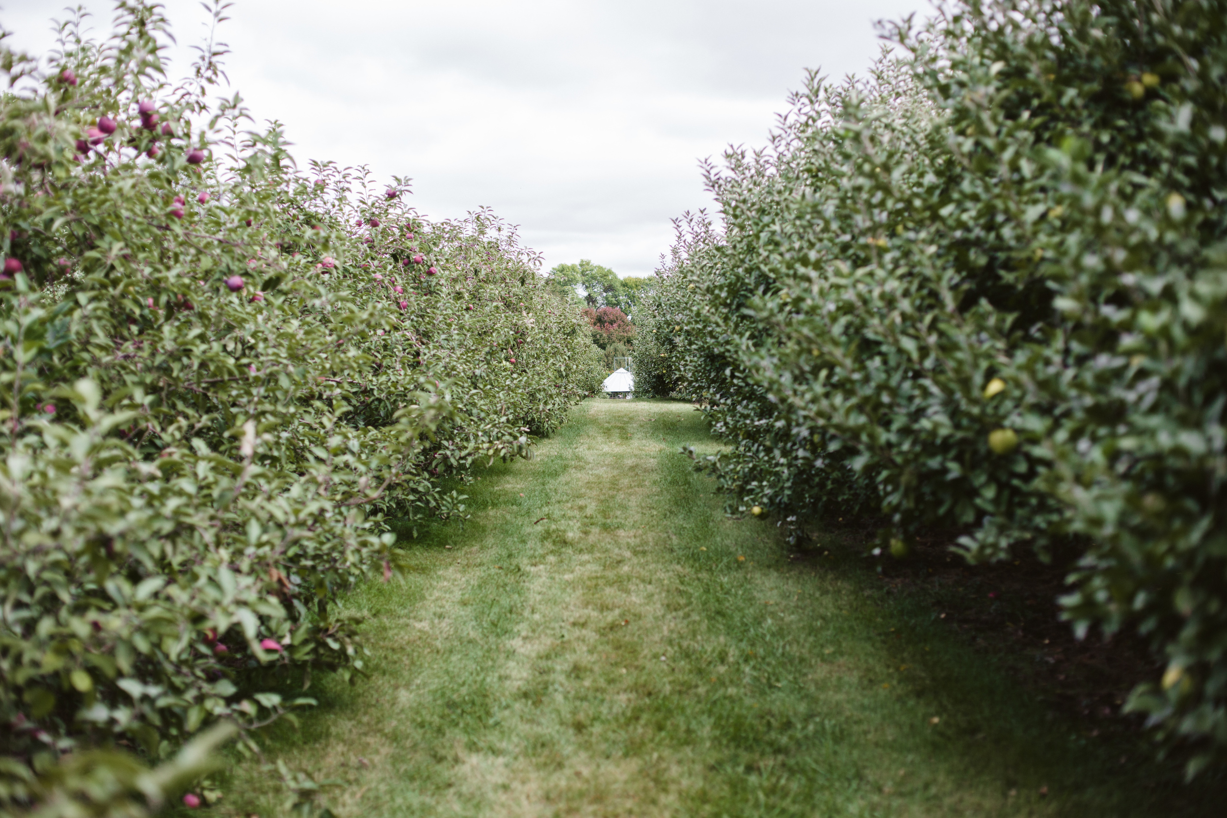 appleorchard0913.jpg
