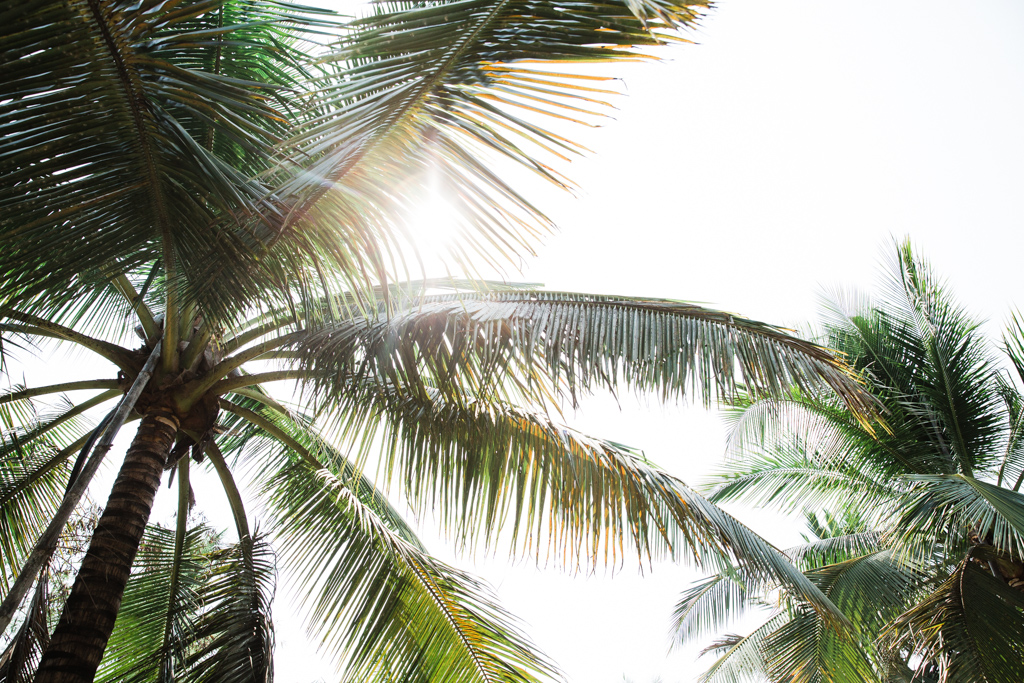 1603_Thailand_CoconutSugar-3.jpg