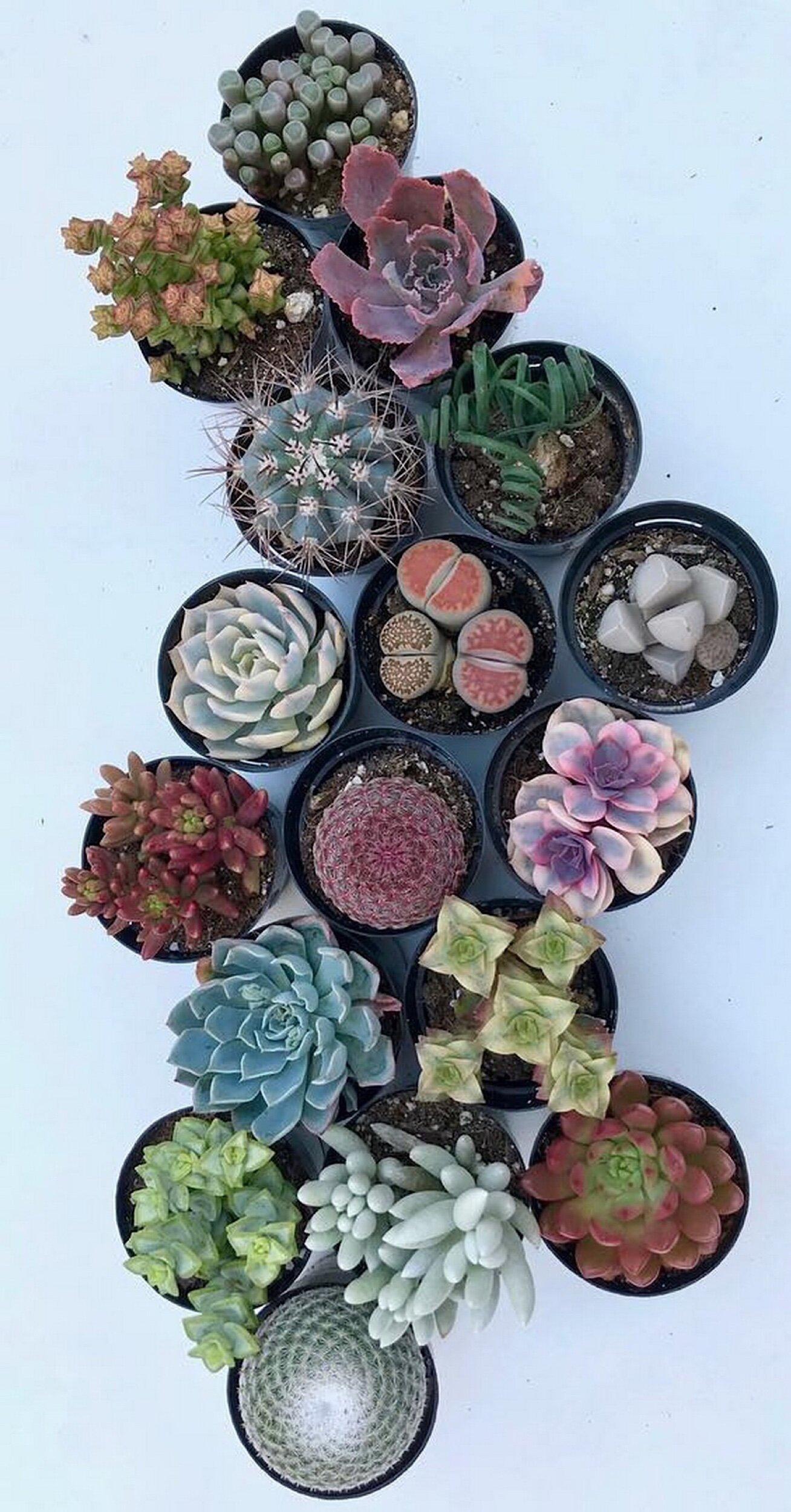 50 Gorgeous Succulent Garden Ideas @fairyblooms