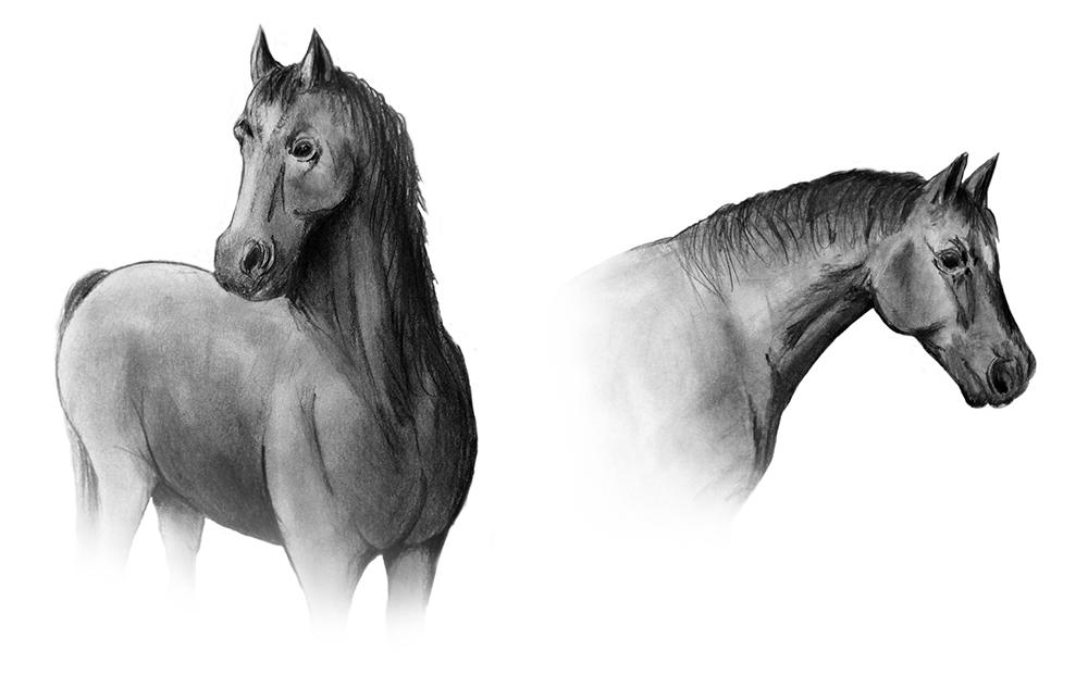 Horse Combined.jpg