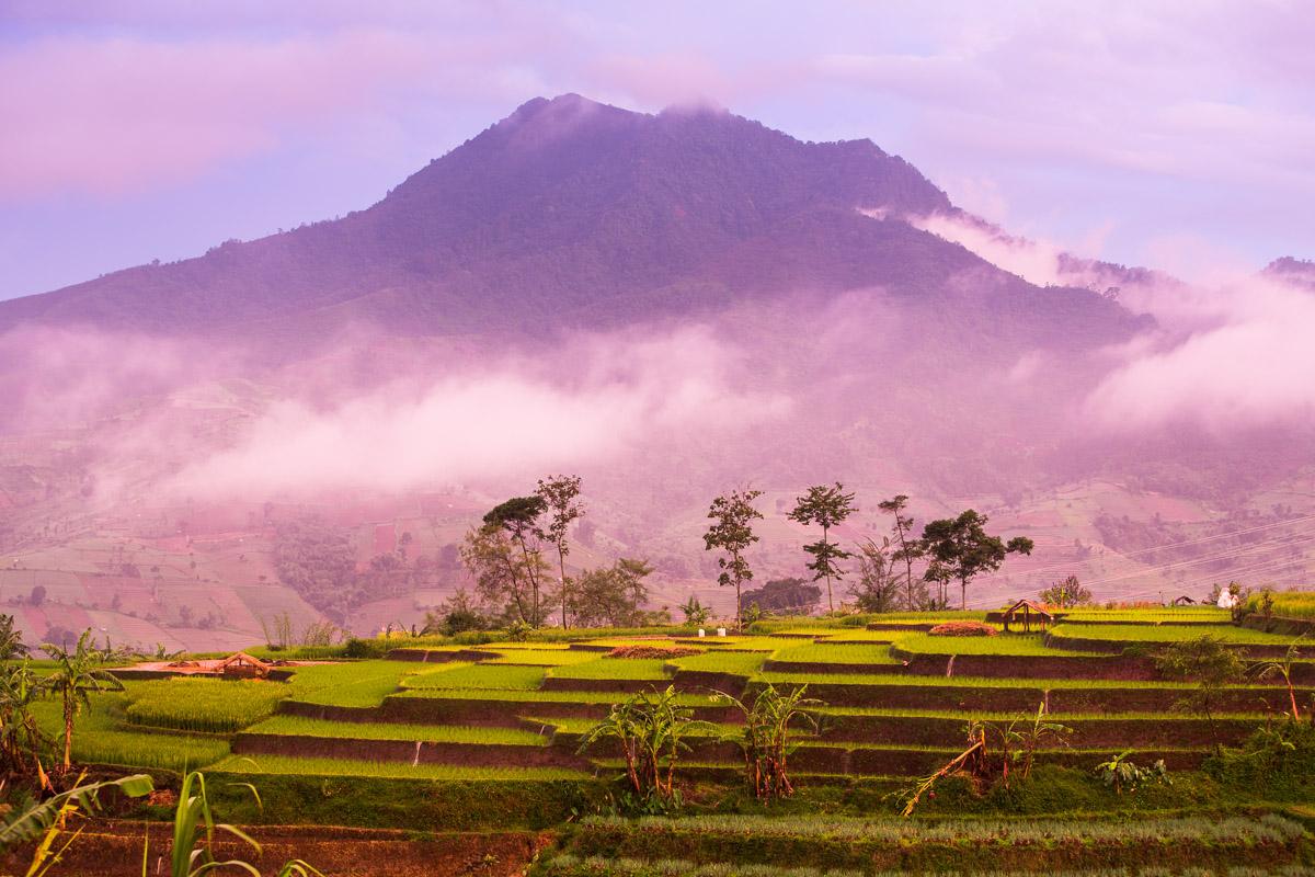 View from Coffee Basecamp, Gunung Rakutak,Panawuan Village, Java, Indonesia
