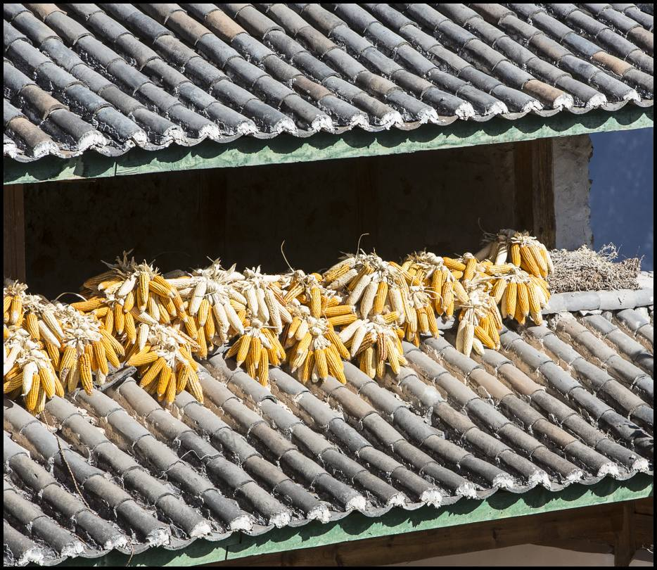 Hierloom corn dries within the help of the sun and wind on a rooftop.