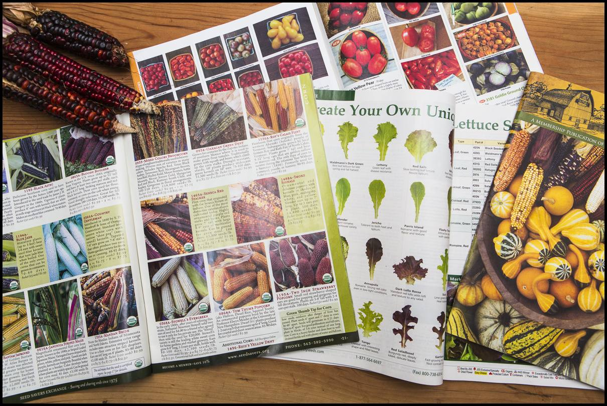 Below zero outside, ice on the windows, and the seed catalogs begin to drift up on the kitchen table at this time of year. We are trying more and more to chose varieties based on their history and adaptations to our region, and looking forward to saving and sharing more seeds with growers and farmers nearby. Along the way, we are finding, learning, and honoring the personal and close to home stories the seeds can hold.