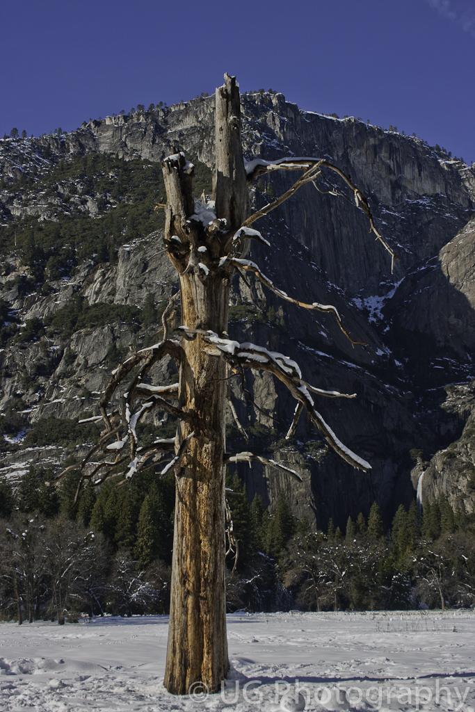 Yosemite 114.jpg