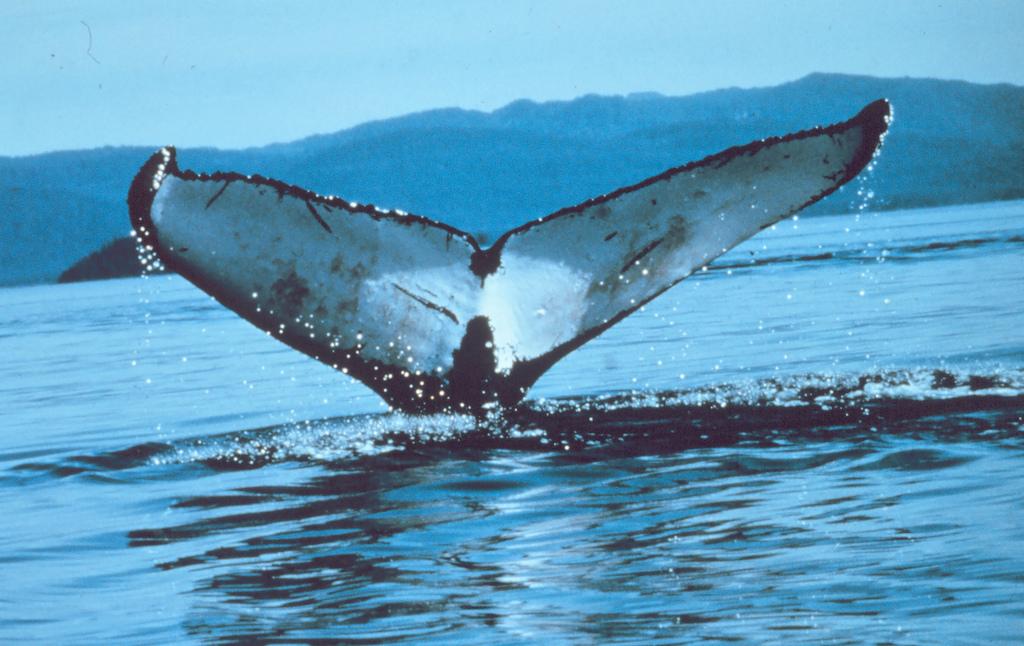 whale-fluke.jpg