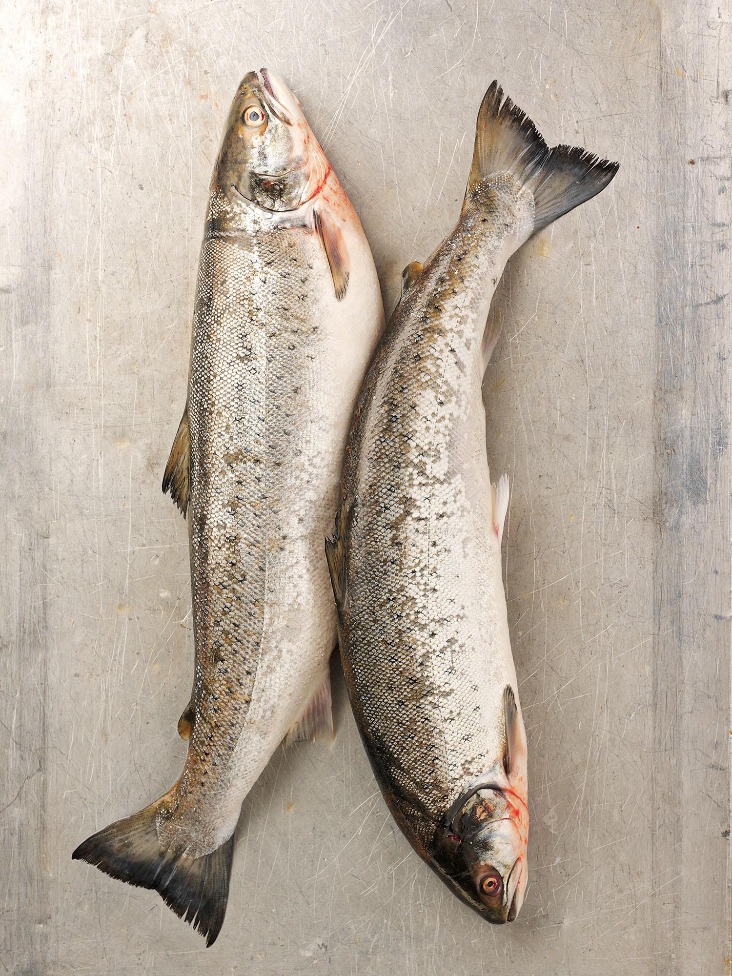 Food Photography Photographer London UK Trout Fish